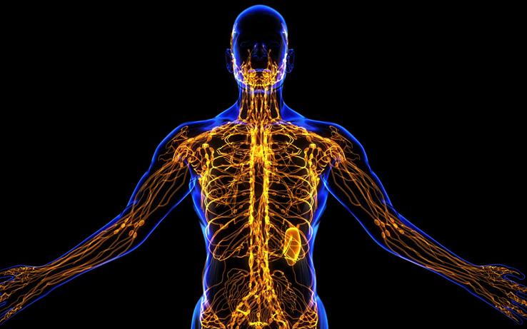 A importância do sistema linfático