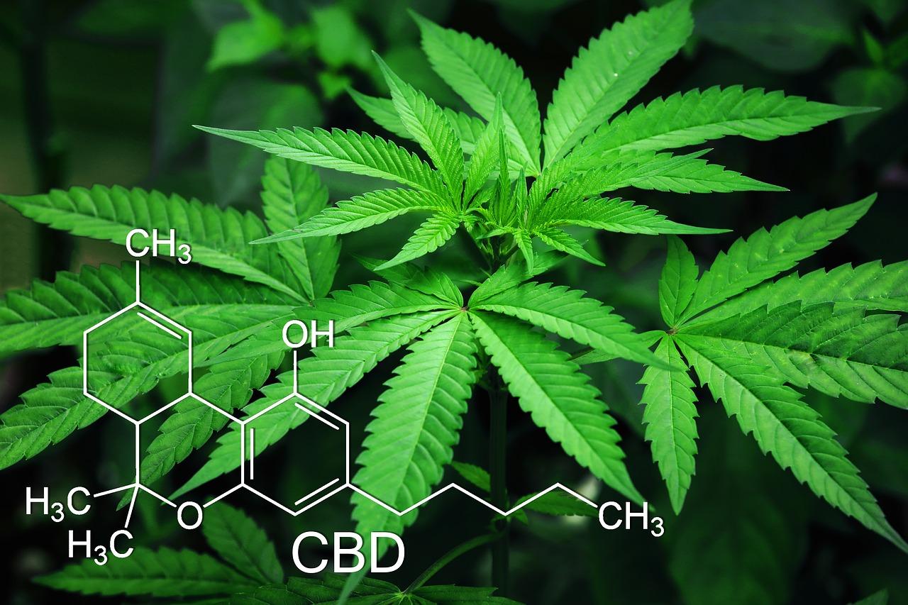 O crescente uso da cannabis medicinal